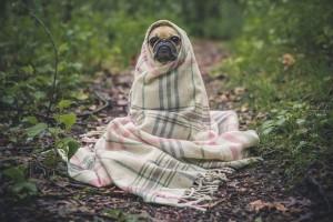 pet during divorce